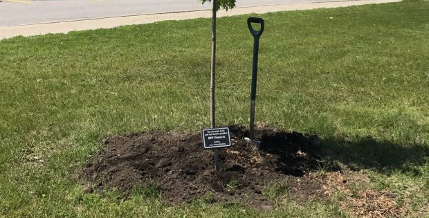 Tree planted on behalf of Francis, one of the ProntoForms' beloved ProntoPups